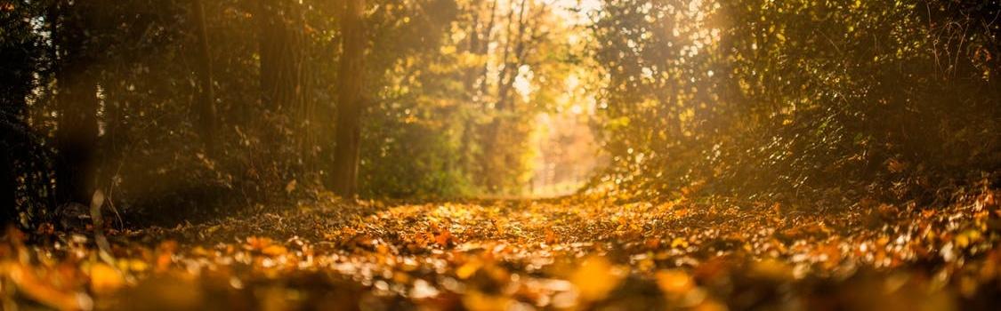 Coucher de soleil en forêt